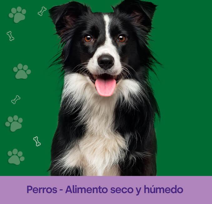perros-P-1.jpg